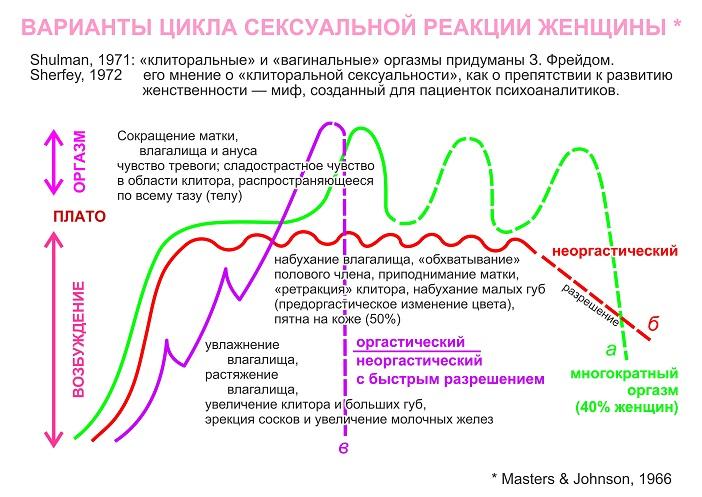 Копулятивный цикл мужчин и женская сексуальность